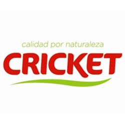 Brocoli Cricket